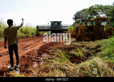ETHIOPIA, Gambela, Abobo, the government give large land for cheap lease to domestic and foreign investors, after - Stock Photo