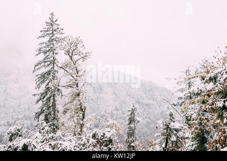 Borjomi Plateau, Caucasus, Eurasia. Pine Growing On Rocky Slope Of Mountains. First Snow And Snowfall Over Rocks - Stock Photo
