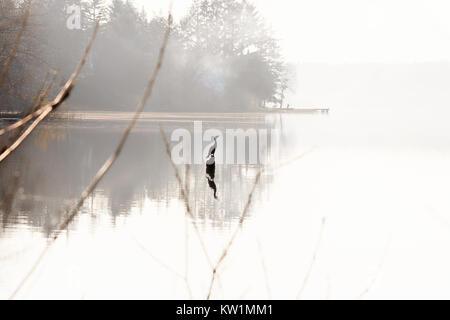 bird silhouette on white lake - Stock Photo