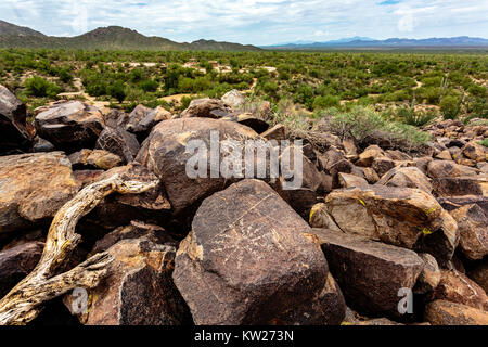 Ancient native petroglyphs adorn the desert varnish on the boulders of Signal Hill in Saguaro National Park West - Stock Photo