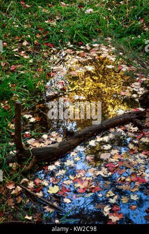 Fallen leaves create a seasonal frame for this reflection in a pond at Bear Wallow in the Santa Catalina Mountains - Stock Photo
