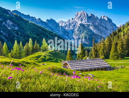Idyllic landscape in the Alps with traditional mountain chalet and fresh green mountain pastures with blooming flowers - Stock Photo