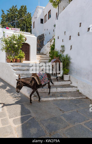 Donkey taxi – donkeys used to carry tourists to Acropolis of Lindos (Rhodes, Greece) - Stock Photo