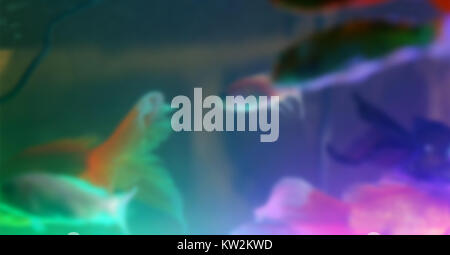 Blurry Tropical colorful fishes swimming in aquarium with plants - Stock Photo