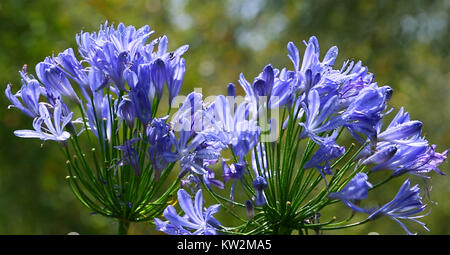 Spring bright and colorful violet flowers. Closeup flower background. - Stock Photo