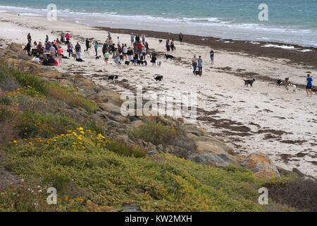 A group of border collies and their owners meet on a windswept beach. - Stock Photo