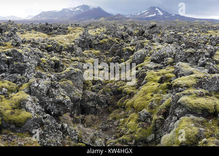 Moss covering the Berserkjahraun lava field between Stykkishólmur and Grundarfjörður in West Iceland. - Stock Photo