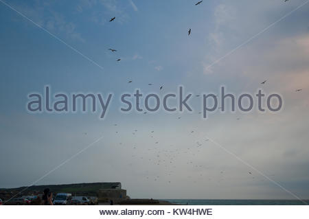 Flocks of sea birds in the sky above Seaford Beach, Lewes District, East Sussex, England, United Kingdom - Stock Photo
