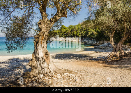 close-up of olive trees on a small and peaceful cove of turquoise waters and calcareous stones near the village - Stock Photo