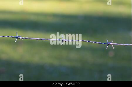 Close up of a strand of barbed wire, against a nature background. - Stock Photo