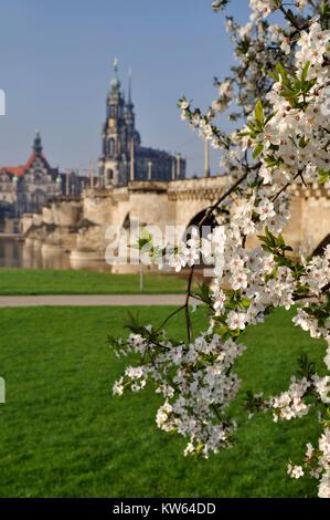 Dresden spring in the Elbufer, Dresden Fruehling am Elbufer - Stock Photo