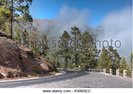 Road on Tenerife, Canary Islands, Spain from the tope of El Tiede through a pine forest and rising clouds. - Stock Photo