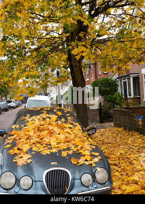 Car parked in an English street under a tree with fallen leaves on its bonnet and windscreen and on the pavement. - Stock Photo