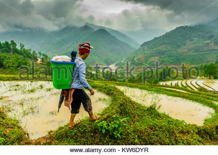 Red Dao hill tribe woman hiking through rice terraces, Muong Hoa Valley, near Sapa, northern Vietnam. - Stock Photo