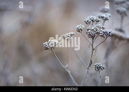 Winter seed headin a wintry Swedish forest. - Stock Photo