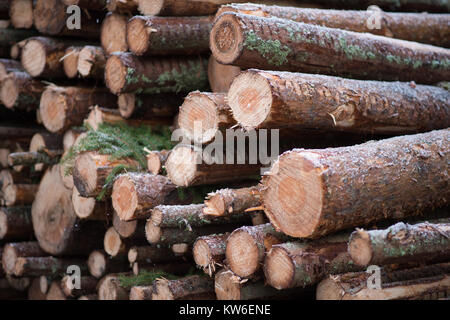 Harvested timber in a snowy Swedish forest. - Stock Photo