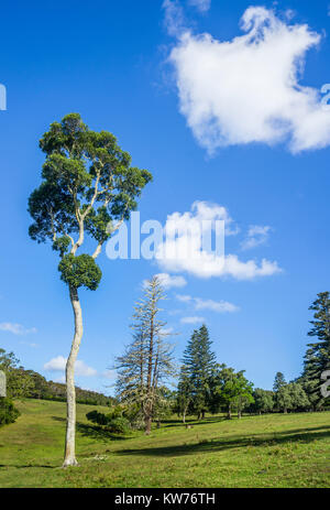 Norfolk Island, Australian external territory, pasture at Anson Bay Road - Stock Photo