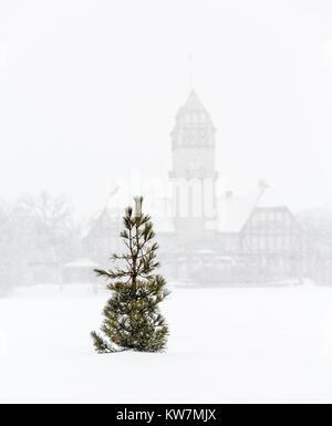 Lone Pine tree in a winter storm, Assiniboine Park, Winnipeg, Manitoba, Canada. - Stock Photo