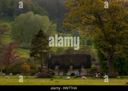 Sheep grazing outside a cottage, near Broadway in the Cotswolds - Stock Photo