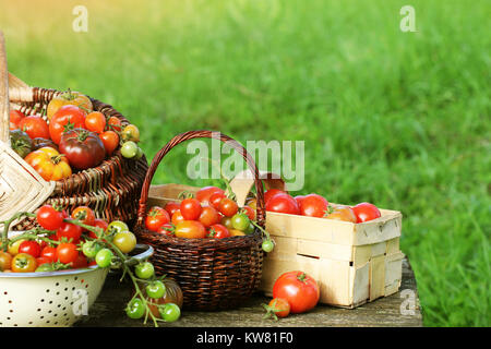 Heirloom variety tomatoes in baskets on rustic table. Colorful tomato - red,yellow , orange. Harvest vegetable cooking - Stock Photo