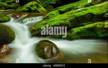 Roaring Fork Stream, Great Smoky Mountains NP, TN, USA, by Bill Lea/Dembinsky Photo Assoc - Stock Photo