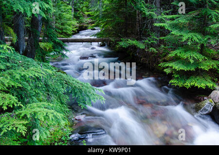 The swift waters of Jackson Creek flow thru the forest of Glacier National Park before it empties into Lake McDonald. - Stock Photo