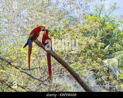 Love Birds in the Park - Stock Photo
