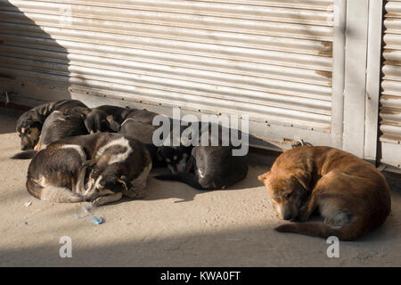 Pack of street dogs sleeping during winter in Kathmandu, Nepal - Stock Photo