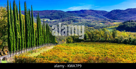 Impressive autumn landscape,view with cypresses and vineyards ,Tuscany,Italy.