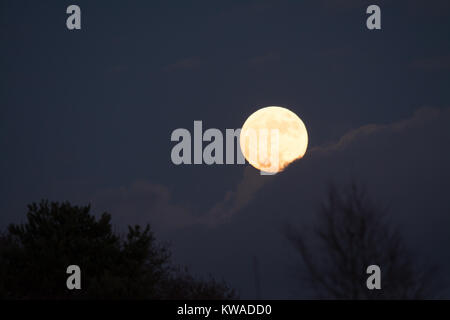 The first supermoon of 2018 rises in Surrey, UK. - Stock Photo