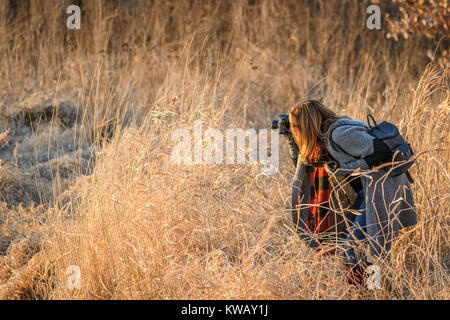 woman photographer holding digital camera taking closeup up tall grass in field at sunset - Stock Photo