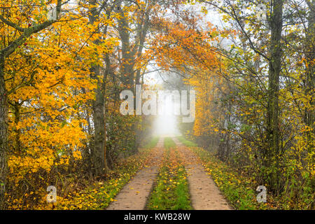 Autumnal view of the march railway embankment in Kirchwerder, 4 and marshy land, Hamburg, Germany, Europe, Herbstliche - Stock Photo