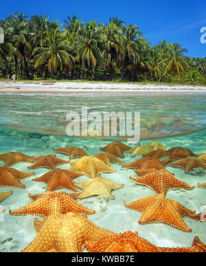 Over and under sea surface near the shore of a tropical beach with coconut trees and many starfishes underwater - Stock Photo