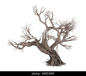 Dead tree isolated on white background, 3D rendering - Stock Photo