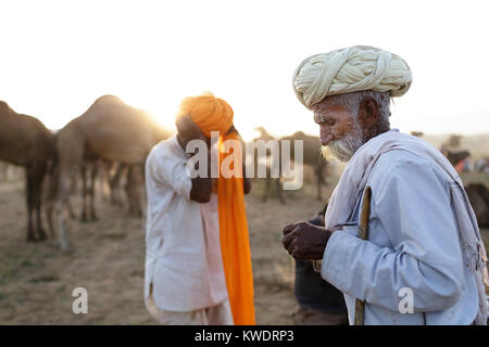 Scene at Pushkar Camel Fair, senior traders putting on and fixing turbans in front of camels, talking and smoking, - Stock Photo
