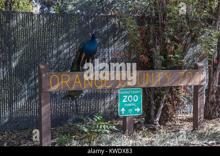 Zoo road sign Stock Photo, Royalty Free Image: 550523 - Alamy Zoo Road Sign