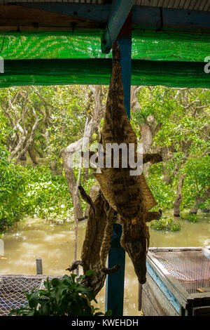 Two crocodile skins and heads, hanging upside down to dry, at a floating restaurant that serves crocodile meat, - Stock Photo
