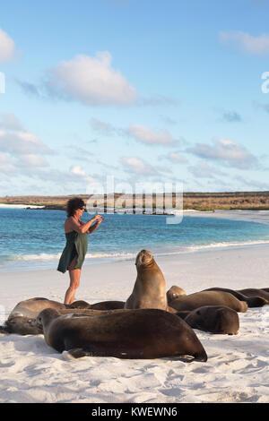Galapagos tourist taking a photo of Sea Lions, Gardner Bay, Espanola Island, Galapagos National Park, Galapagos - Stock Photo