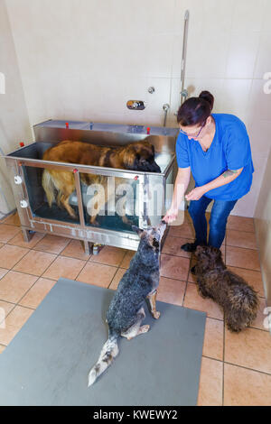 picture of a woman who works with dogs at a hydrotherapy station - Stock Photo