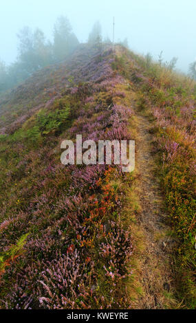 Early misty morning dew drops on wild mountain grassy meadow with wild lilac heather flowers and spider web. - Stock Photo