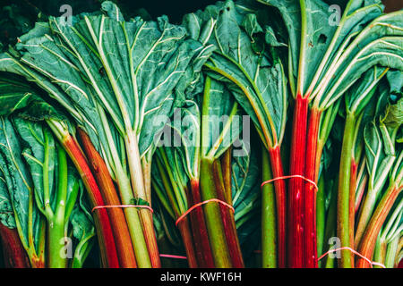 Rhubarb leaves - Stock Photo