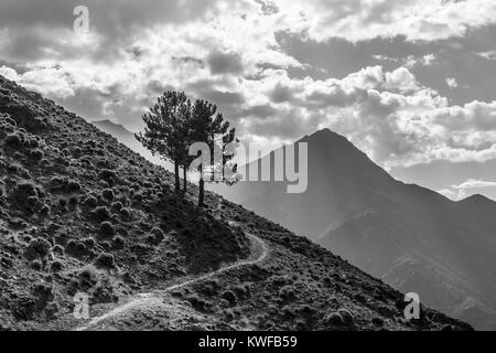 Mountain path with perfectly located lonley tree stand , Atlas Mountains by Imlil, Morocco. - Stock Photo