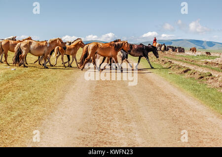 Shine-Ider District, Mongolia -  July 22, 2010: Mongolian horses herded by horseback nomad cross dirt track on steppe - Stock Photo