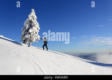 Woman hiker in active outfit touching a frozen spruce on a snow covered mountain, Krvavec, Slovenia. - Stock Photo