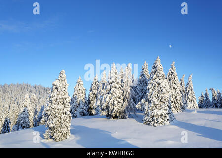 Winter wonderland, frozen spruces on a snow covered mountain, Krvavec, Slovenia. - Stock Photo