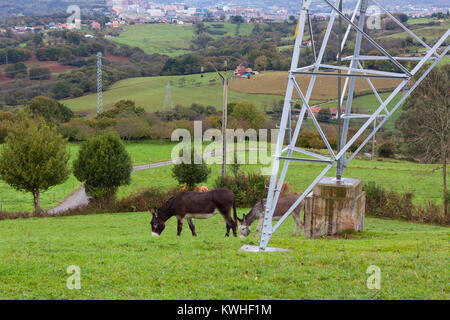Two donkeys on the hill with panoramic view of Oviedo on the background - Stock Photo