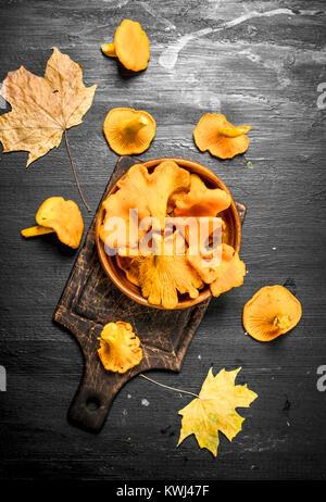 Fresh chanterelle mushrooms in a bowl. On the black chalkboard. - Stock Photo