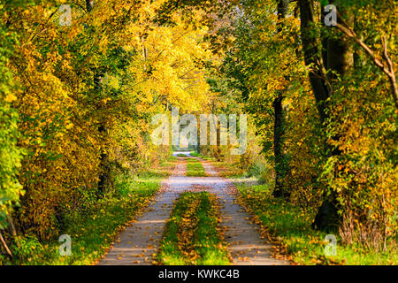 Autumnally coloured trees in the nature reserve Kirchwerder of Meadows, Hamburg, Germany, Europe, Herbstlich verf?rbte - Stock Photo