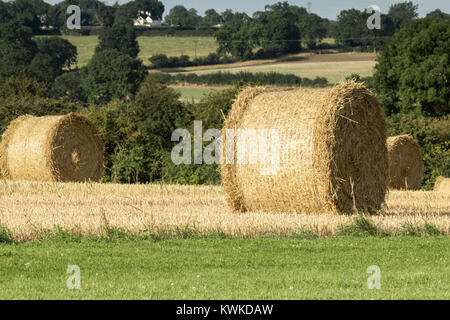 An image of a bale of hay, drying in the sun on a warm summers day at Eye Kettleby Lakes, Melton Mowbray, Leicestershire, - Stock Photo