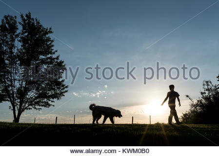 Silhouette boy playing with dog on field against sky during sunset - Stock Photo